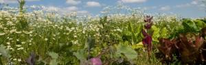 Stage de Jardinage bio @ Ferme Bio du Petit Sart   Grez-Doiceau   Wallonie   Belgique